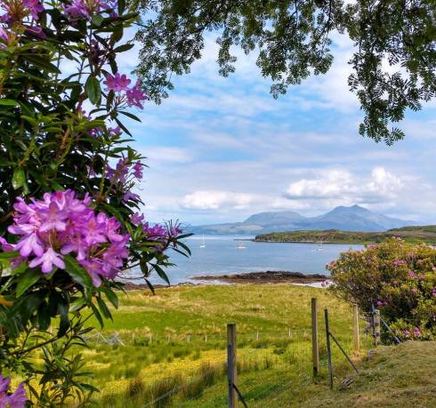Scot - skye - rhodo close
